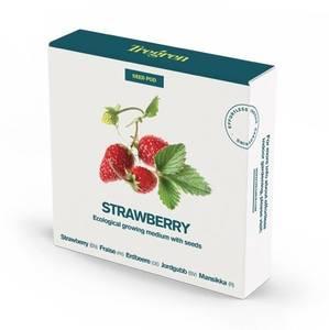 Tregren Herbie and Genie seed pods strawberry