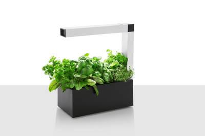 Tregren Herbie hydroponic indoor garden black