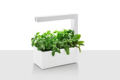 Tregren Herbie hydroponic indoor garden white